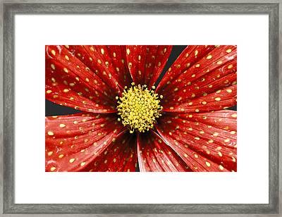 Strawberry Plant Framed Print by Alice Gosling