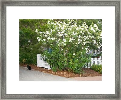 Stray Cat Framed Print by Craig Keller