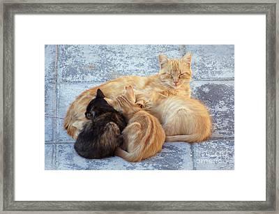 Stray Cats 3 Framed Print