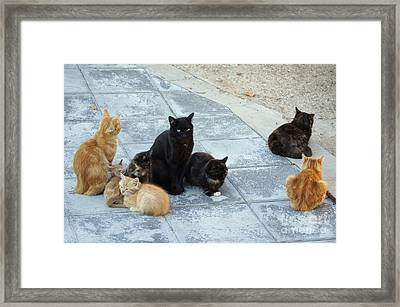Stray Cats 5 Framed Print