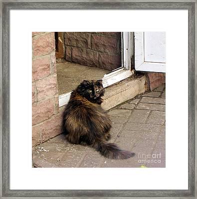 Street Cat Framed Print by Yury Bashkin