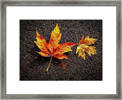 Street Leaf Framed Print