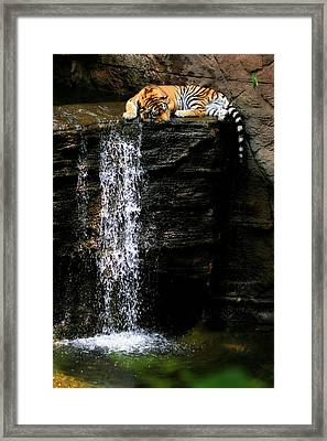 Strength At Rest Framed Print