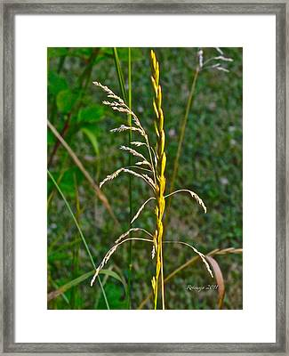 Strength In Numbers Framed Print by Rotaunja