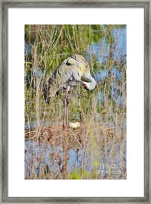Stretch And Preen Framed Print