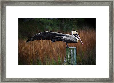 Stretch It Out Framed Print by Paulette Thomas