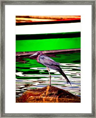 Stretching Bird Framed Print