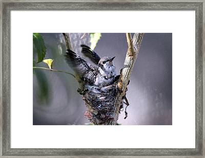 Framed Print featuring the photograph Stretching My Wings by Jo Sheehan