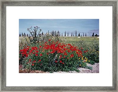 Striking Spanish Scenery Framed Print by Barbara Plattenburg