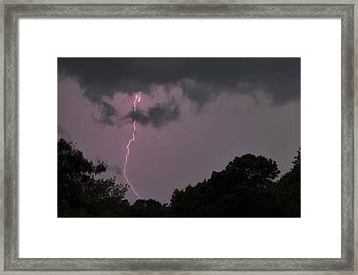 Striking Framed Print by Tazz Anderson