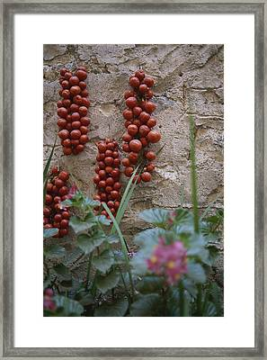 Strings Of Tomatoes Dry On A Wall Framed Print by Tino Soriano