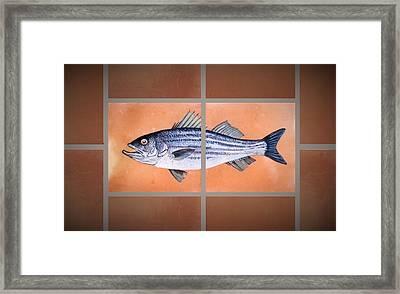 Striped Bass Framed Print by Andrew Drozdowicz