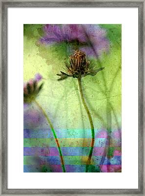 Striped Celebration Framed Print by Bonnie Bruno