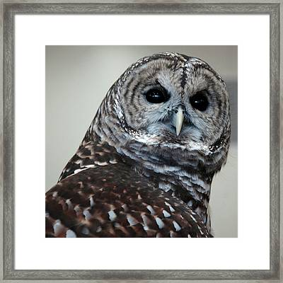 Striped Owl Framed Print by LeeAnn McLaneGoetz McLaneGoetzStudioLLCcom