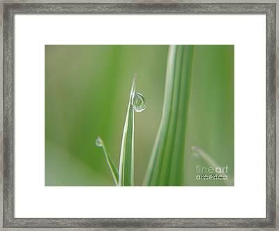 Striped Raindrops Framed Print by Yumi Johnson