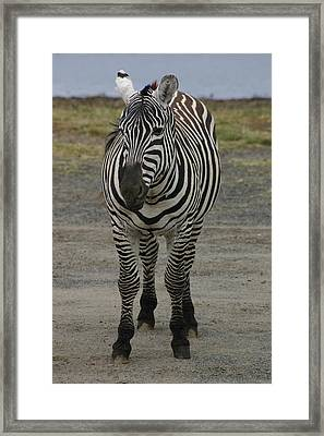 Stripes Framed Print by Tia Anderson-Esguerra