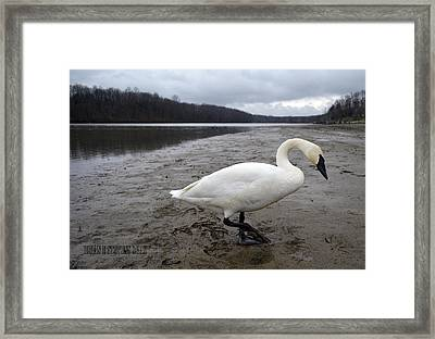 Framed Print featuring the photograph Strolling by Brian Stevens