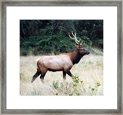 Strolling The Meadow Framed Print