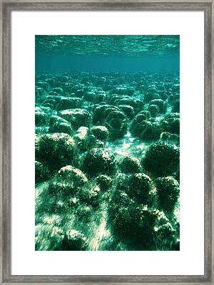 Stromatolites Framed Print by Peter Scoones