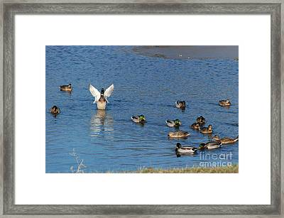 Framed Print featuring the photograph Struttin It by Mark McReynolds