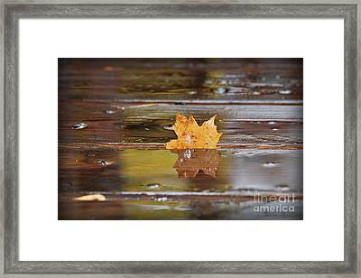 Stuck Maple Leaf Framed Print