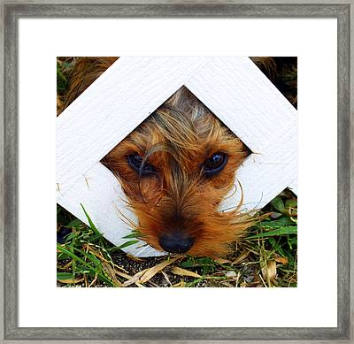 Stuck On You Framed Print by Karen Wiles