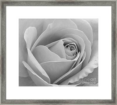 Framed Print featuring the photograph Study In Black And White by Cindy Manero