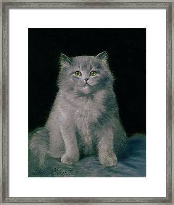 Study Of A Cat  Framed Print by Lilian Cheviot