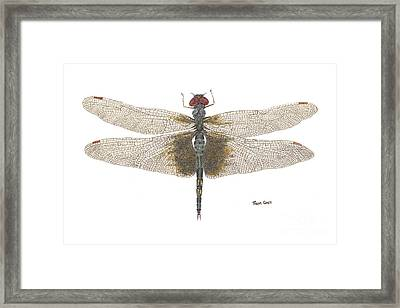 Framed Print featuring the painting Study Of A Female Black Saddlebags by Thom Glace