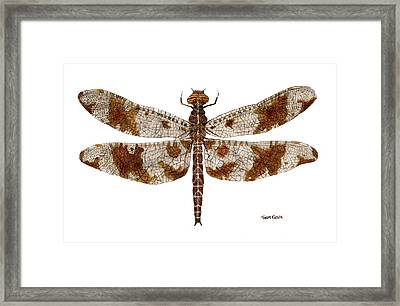 Framed Print featuring the painting Study Of A Female Filigree Skimmer by Thom Glace