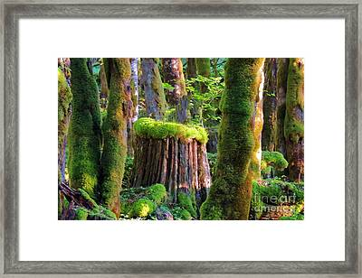 Stump And Moss  Framed Print