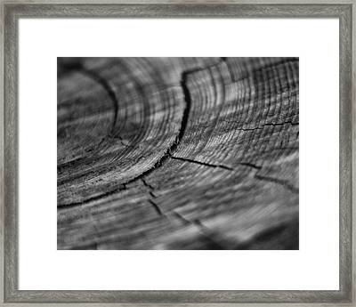 Stump Framed Print by Marlo Horne