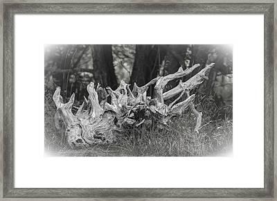 Stumped Framed Print by Daniel Milligan
