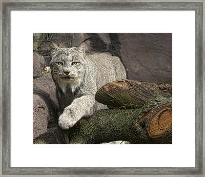 Framed Print featuring the photograph Stunning by Cheri McEachin
