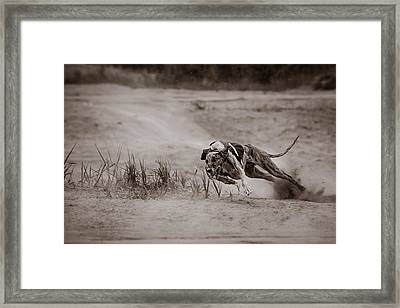 Sturdy And Powerful Framed Print by Ari Salmela
