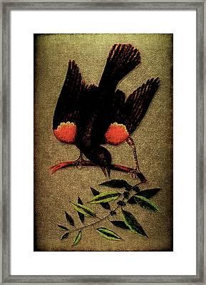 Sturnus Niger Alis Supernis Rubro Colore Framed Print by Li   van Saathoff