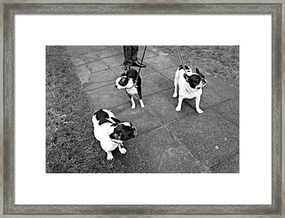 Stylish Framed Print by Leanna Lomanski