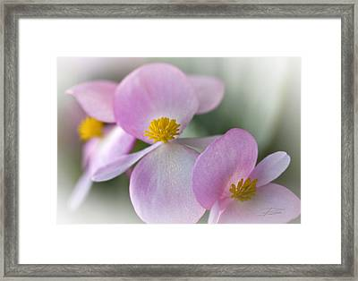 Subtle Blush Framed Print by Barbara  White