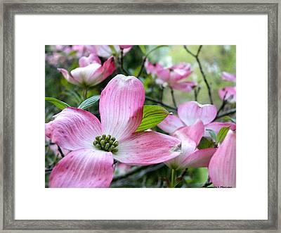 Subtle Magnolia Framed Print
