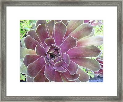 Succulent At Highspire Framed Print by Tina Ann Byers