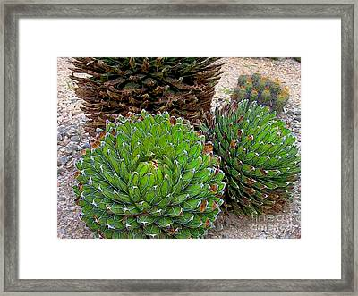 Succulent Cactus Framed Print