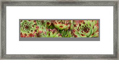 Framed Print featuring the photograph Succulent by Trevor Chriss