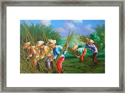 Sugar Cane Harvest Framed Print by Pretchill Smith