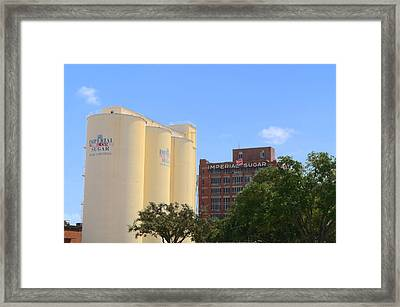 Sugar Free Framed Print