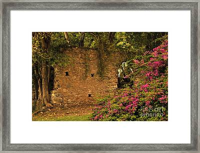 Sugar Mill Of The Past In St. Lucia Framed Print by Cindy Lee Longhini