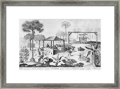 Sugar Production In The West Indies Framed Print by Everett