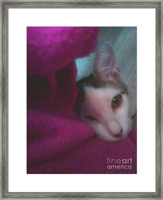 Sugar Sugar Framed Print