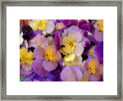 Sugared Pansies Framed Print