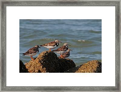 Sullivan's Island Shore Birds Framed Print by Melissa Wyatt