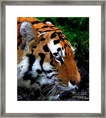 Framed Print featuring the photograph Sumatran Strength by Davandra Cribbie